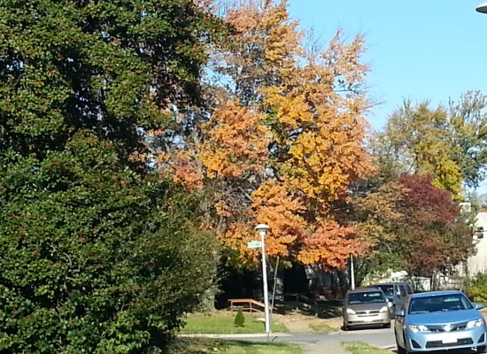 20141102_144901_Fall_Foliage_No_Politics