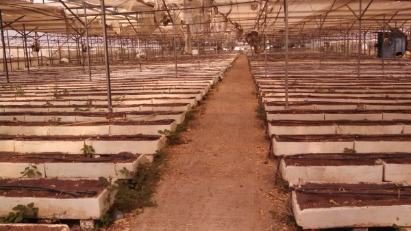 Negev Bedouin Flower Greenhouse