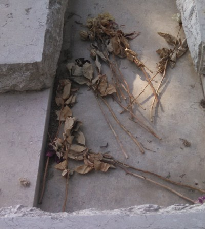 Graves of Edward Joffe and Leon Kanner Jerusalem - Dried Flowers