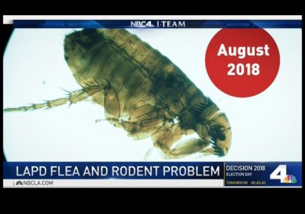 https://www.nbclosangeles.com/news/local/LAPD-Cops-Face-New-Threat-Fleas-Rats-and-Typhus-Disease-499734581.html